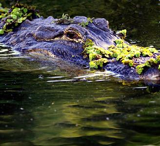 Everglades FL.