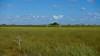 Pa-hay-okee výhľad, Everglades NP, FL