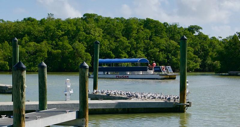 Flamingo Visitor Center, Národný park Everglades, FL