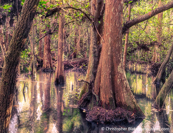 Water Reflections - Big Cypress