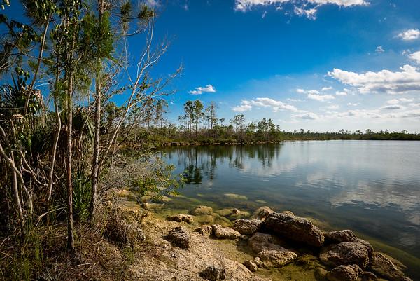 Everglades Lagoon