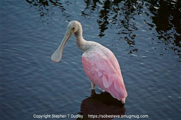 Best Everglades