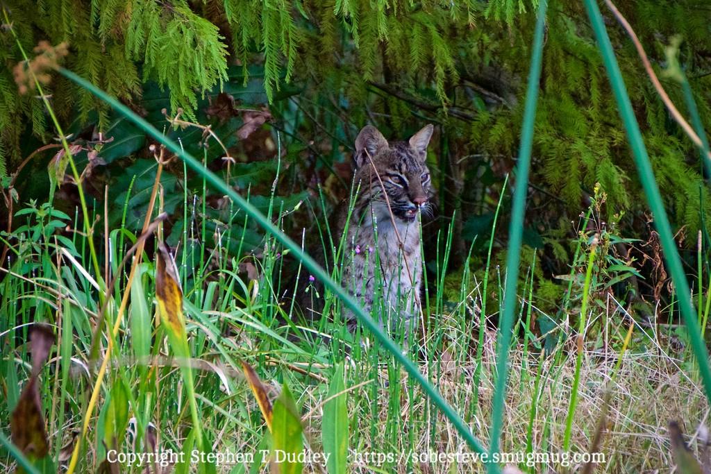 Bobcat 2, Heidi