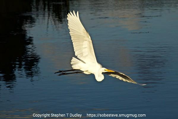 Wakodahatchee Wetlands 2-23-17