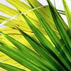 "Everglades National Park: Alex, 17 - ""Beauty in Plain Sight"""