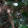"Everglades National Park: Molly, 19 - ""Habitats"""