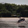 "Everglades National Park: Becca, 17 - ""Taking Flight"""