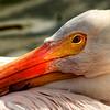 "Everglades National Park: Becca, 17 - ""Pain"""