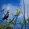 """Everglades National Park: Molly, 19 - """"Everglades"""""""