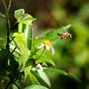 "Everglades National Park: Alex, 17 - ""Flying Away"""