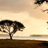 """Everglades National Park: Alex, 17 - """"Joshua Tree"""""""