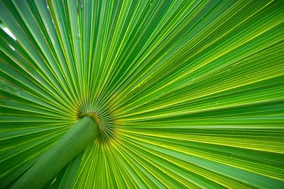 Palm Burst-0375