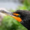 """Everglades National Park: Lauryn, 17 - """"Detached Dreams"""""""