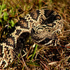 "Everglades National Park: Becca, 17 - ""On Guard"""