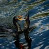 "Everglades National Park: Becca, 17 - ""Lunch!"""