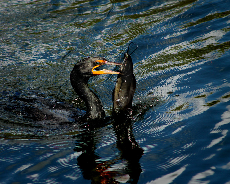 """Lunch!"" by Becca, 17 
