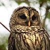 "Everglades National Park: Becca, 17 - ""Heart Chest"""