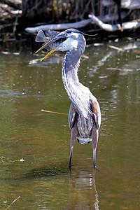 Everglades N P - G2 (19)