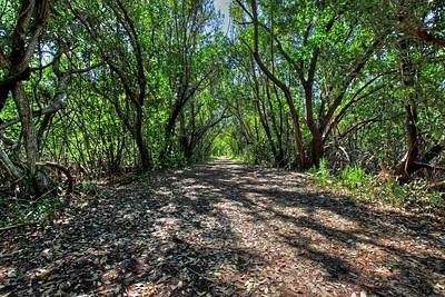 Everglades N P - G2 (5)