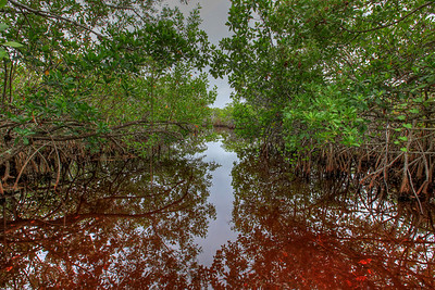 Everglades N P - G2 (9)