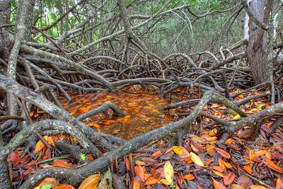 Everglades N P - G2 (6)
