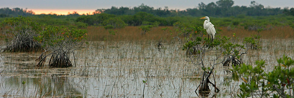 Everglades N P - G2 (16)