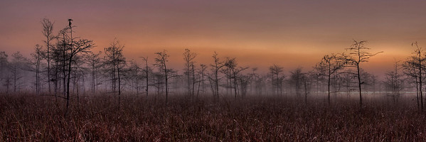 Everglades N P - G2 (10)