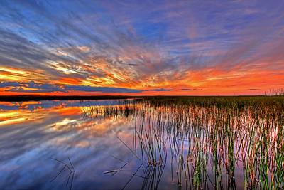 Everglades N P - G2 (20)