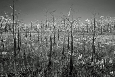 Everglades N P - G2 (2)