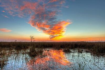 Everglades N P - G2 (44)