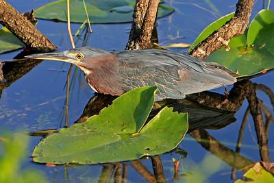 Everglades N P - G2 (66)