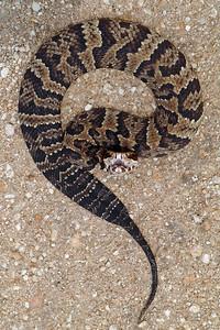Everglades N P - G2 (43)