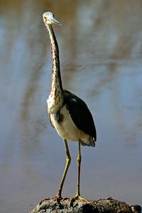 Everglades N P - G2 (67)