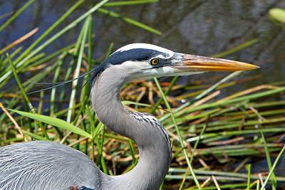 Everglades N P - G2 (38)