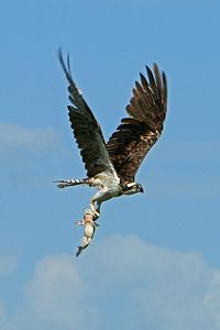 Everglades N P - G2 (25)