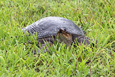 Everglades N P - G2 (60)