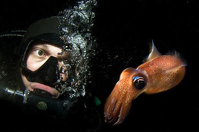 dykare och bl+ñckfisk