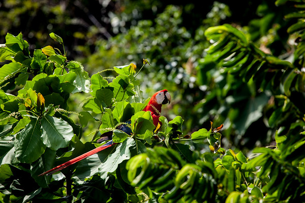 2010, Costa Rica, Carate
