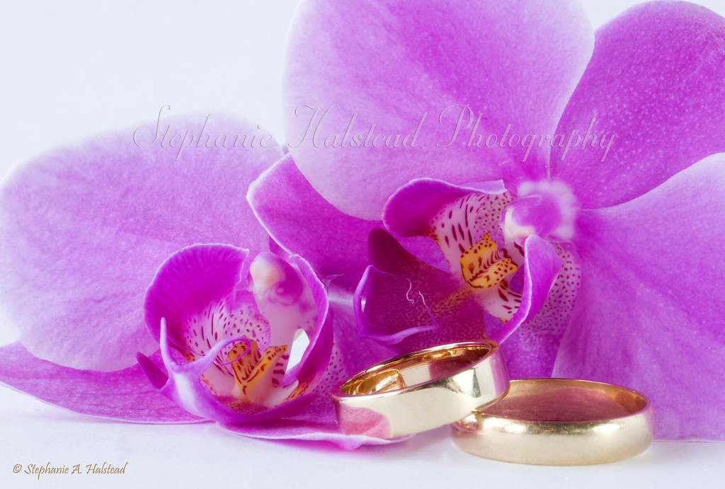 "Orchids and Wedding Rings<br /> Finalist in the July 2010 Details and Macro monthly contest at  <a href=""http://www.BetterPhoto.com"">http://www.BetterPhoto.com</a>."