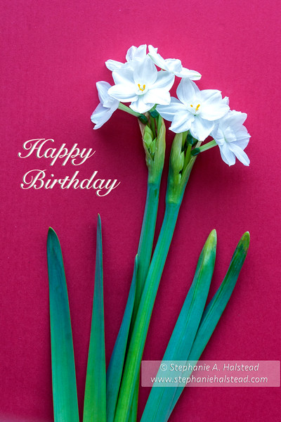 Happy Birthday Narcissus