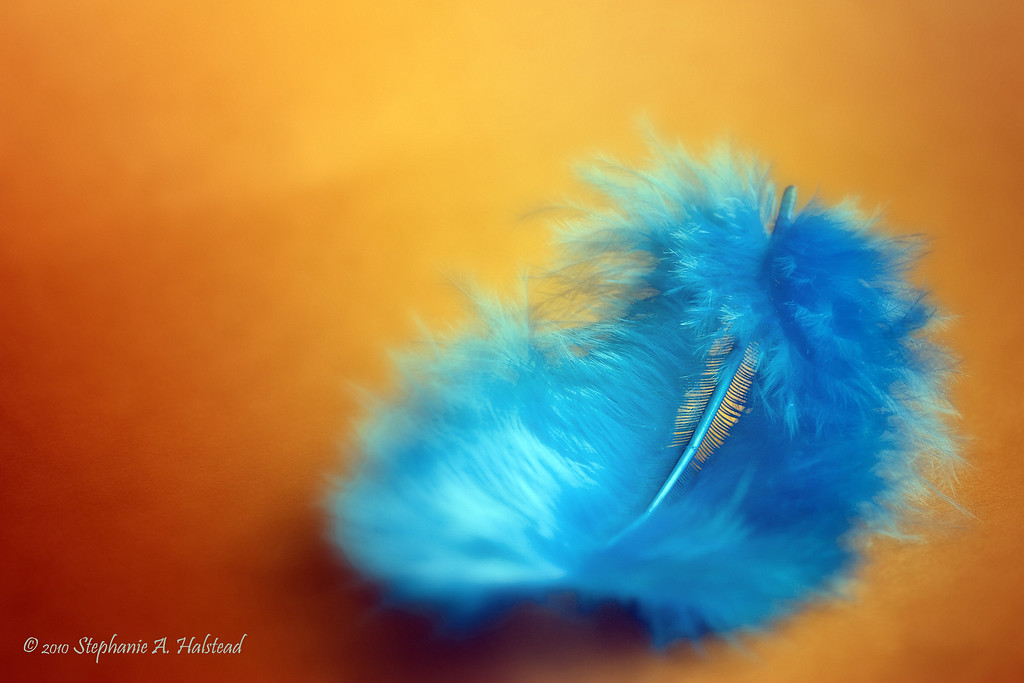 """Feather"" - This image can be personalized as a thank you or birthday card.<br /> August 2010, image was selected as a finalist in the Details and Macro monthly contest at  <a href=""http://www.BetterPhoto.com"">http://www.BetterPhoto.com</a>."