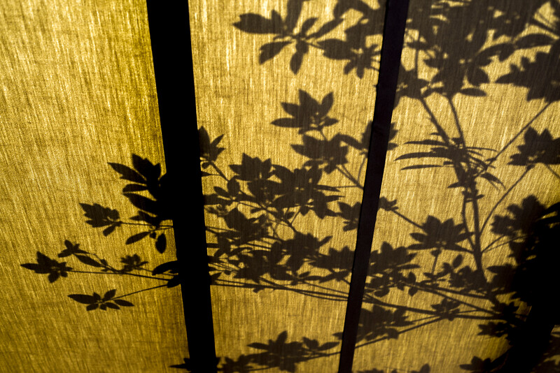 Shadow Of A Branch