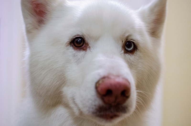 Hitler Dog