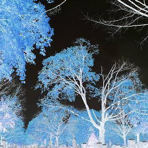 A little blue  copyrt 2014 m burgess