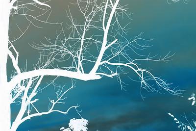 """Tree Branch"" copyrt 2014 m burgess"