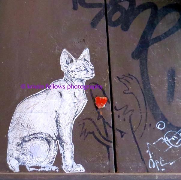 scaredy cat, barcelona