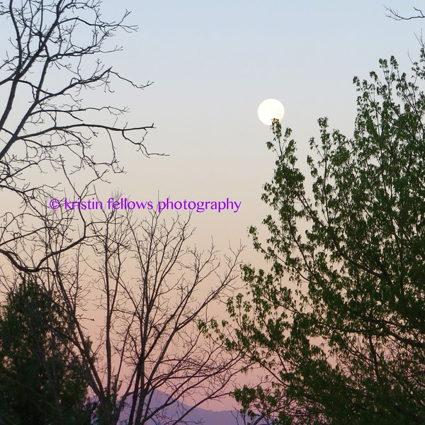 good morning moon