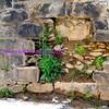 terrarium in the wall