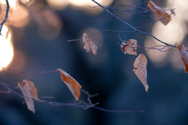 Leaves at Sunset