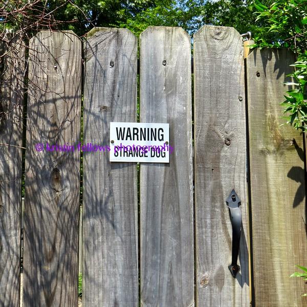 warning, strange dog